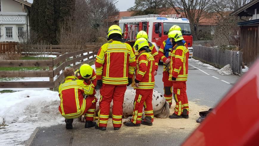 Pferd mit Startschwierigkeiten – Feuerwehr hilft beim Aufstehen!